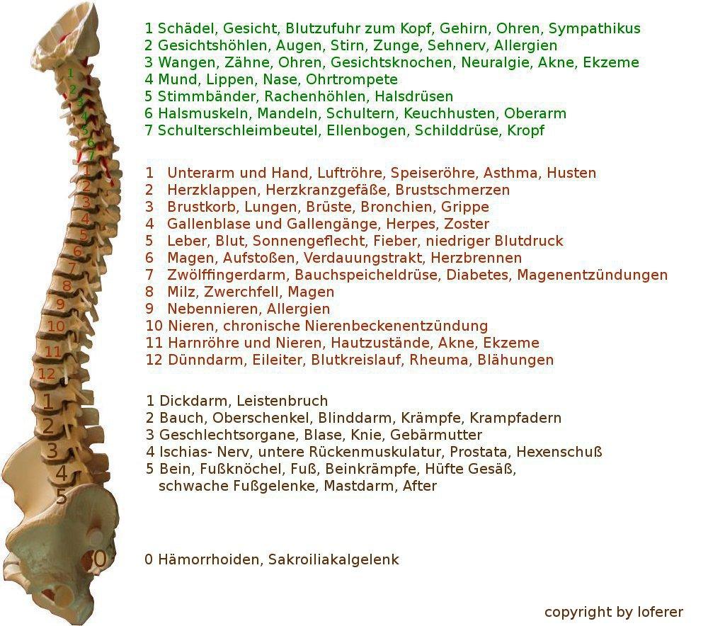 Wirbelsäule, das tragende Element des Körpers....